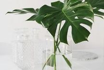 Plants / Plants for your home.