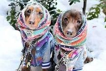 For The Love Of Dachshunds / Cute pictures and gift ideas of sausage dogs, dachshunds, doxies