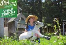 Life at Piebird Vegan Farmstay / Piebird Vegan Farmstay & Soggy Creek Seed Co is a small vegan agri-tourism farm in Nipissing, Ontario. www.piebird.ca