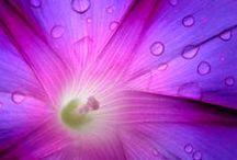 Macro's met regendruppels / Macro's van dieren en bloemen