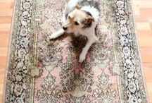 RUG / beautiful rugs and carpets