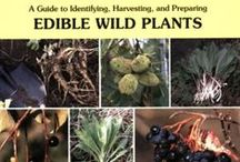 Foraging: Edible wild plants / Guides, tips, photos and resources for finding, sourcing and using edible wild plants and flowers