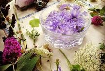 Homestead Apothecary / Natural medicine, beauty and healing using the power of plant and flower essence. Descriptions of plants and herbs and how to use them. Recipes for tinctures, lotions, creams and more.