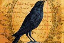 Something to crow about / There is something mysterious about crows. Love the spookiness about them.  / by June Geesey