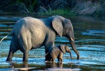 animal story / Animals I love