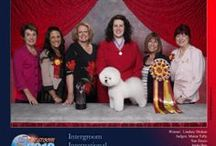 Competitive Dog Grooming / All things related to participating in professional dog grooming competitions.