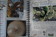 Biology and Nature Study / by Phyllis Bergenholtz