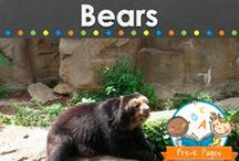 BEAR THEME / Bear theme learning activities for teaching about real and pretend bears in your preschool, pre-k, or kindergarten classroom. Literacy, math and more. Brown bears, polar bears, teddy bears and more! Visit me at www.pre-kpages.com for more inspiration for early education! / by Vanessa @pre-kpages.com