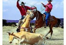 Cowboys # 3 / by Patsy Aubuchon
