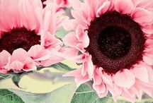 Gardening / by Marilyn Blatt