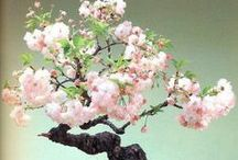 Bonsai Beauty / I do not own any of these pins, please pin as many as you like.  Happy Pinning / by Tamera Sarkozi