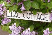 Cottage~Lavender~n~Lilacs / by Tamera Sarkozi