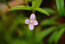 Growth: Wild Herbs/ Wildkräuter / All about curative and/ or edible wild herbs.   --   Alles über heilkräftige und/ oder essbare Wildkräuter