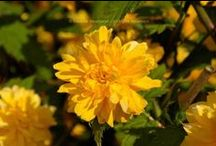 Growth: Pretty Flowers/ Hübsche Blumen / All about pretty flowers - simply because it's beautiful   --   Alles über hübsche Blumen - einfach weil's schön ist.