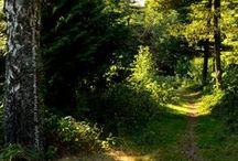 The Path/ Der Weg / The path is the goal.   --   Der Weg ist das Ziel.