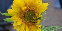 Natur(e): Blossoming/ Erblühen / FLOWER POWER: Get inspired by these beautiful flowers and allow yourself to blossom! -- FLOWER POWER: Lasse Dich von diesen wunderschönen Blüten inspirieren und erlaube Dir zu erblühen.