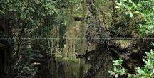 Natur(e): Reflections / Reflexionen / The medicine of reflection... -- Die Medizin der Reflexion...