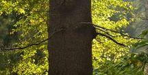 Natur(e): Trees/ Bäume / VIRTUAL TREE HUGGING - Trees teach us the connection between earth and heaven. -- VIRTUELLES BÄUME-UMARMEN - Bäume lehren uns die Verbindung zwischen Erde und Himmel.