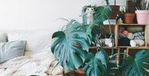 Botanical Interiors / Share our love for plants.