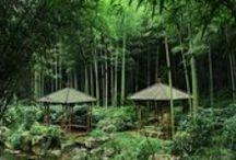 Tropical / Lush Adventures