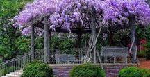 Growth: Dream Garden/ Traumgarten / If I had a garden, I would grow...   --   Wenn ich einen Garten hätte, würde ich pflanzen...