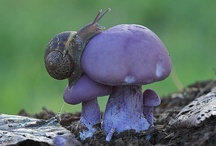 snails and shells / by blue tazzy