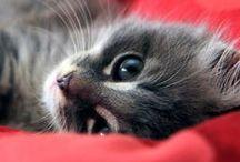 Cats / cute cats
