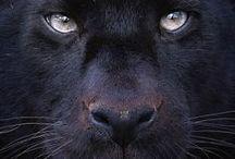 wild animals / wild!!!