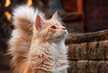 Book | Animal Cats
