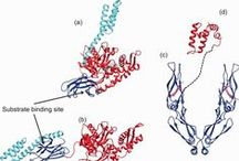 HSP40 Structure and Function