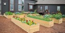 Gardening and Landscape Ideas / Inspired by these gardens and planters