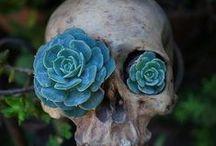 **Garden & Herbs** / by Candice Noneya..............