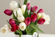Tulips - my favourite flowers