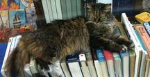 well read cats