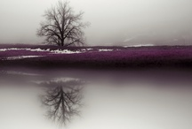 Photography / Corinne Poduch - Nature Photography