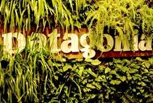Patagonia Retail Stores
