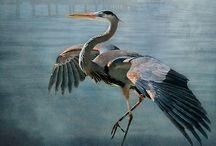 Birds in Watercolour / by Elizabeth Little