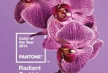 Radiant Orchid / Radiant Orchid #Pantone #Colouroftheyear See more wedding ideas- www.whitemischiefbridal.co.uk