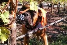 """""""Wine Dogs"""" / """"Wine Dogs of California"""" is a photographic journal created for all for the love of dogs and wines.  Here, other dog-friendly sites are captured."""