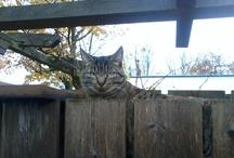 Cats!♥