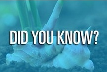 Did You Know? / What Ginger can do for you!