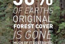 ☁ sustainability ☂ / safe nature