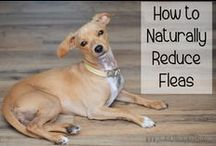 Natural Pet Care / Healthy and natural ways to raise a pet.