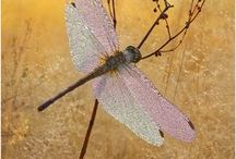dragonfly  AND butterflies.. !!