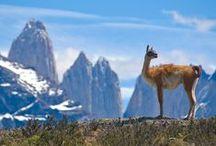 Viajar a Chile / ¿Quieres recorrer el país trasandino? #Viajar a #Chile con #Despegar es toda una experiencia que no querrás perderte.