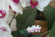 Plants miniature