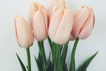 flowers / 祝福