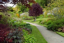 National Trust and other Open Gardens