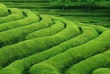 Vert - Green - Verde / Tous les verts moyens