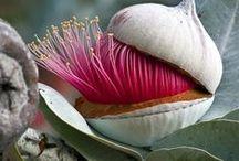 Une fleur - One flower - Una flor